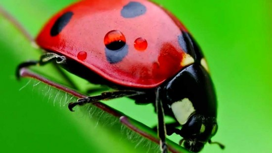 invertebrados21