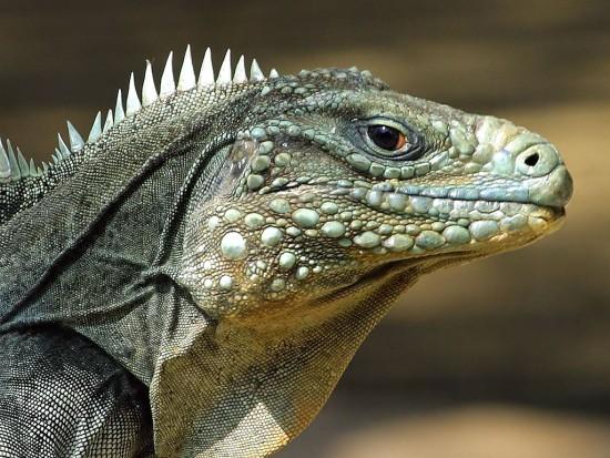 reptiles-lizard-reptile-picture_218069