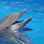 Información sobre los delfines: Características principales
