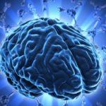 Más información sobre las neurociencias: Qué son, qué estudian, características