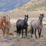 Información sobre 2animales extintos que habitaron América del Norte