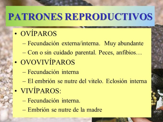 Más información sobre los Animales Ovovivíparos ...