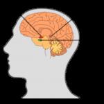 Información sobre la melatonina: ¿Qué es?