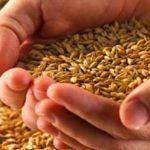 Información sobre los beneficios de consumir granos enteros