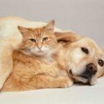 Algunos datos interesantes para amantes de los gatos
