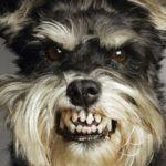 Información sobre la rabia en los perros: Causas, síntomas y etapas