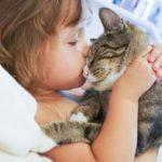 Información sobre alergias: ¿Qué causa la alergia a los gatos?