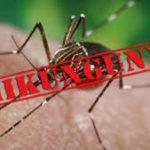 Chikungunya: Información sobre la transmisión y síntomas de esta fiebre