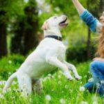 Información sobre cómo ayudar a prevenir las alergias a los perros