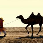 Información sobre los camellos: Hechos, tamaño y hábitos