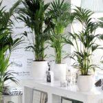 Información sobre las plantas de interior