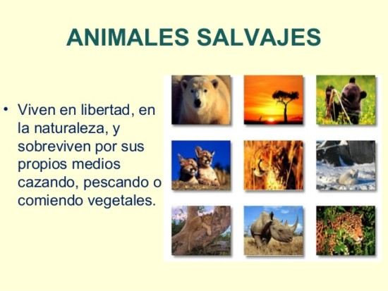 animales-domesticos-y-salvajes-8-638