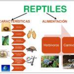 Información de reptiles, clasificación y cuadros comparativos