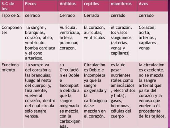 cuadros-comparativos-de-los-sistemas-circulatorio-4-638