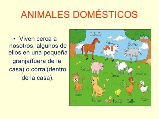 diferencia-entre-animales-domsticos-y-salvajes-2-728