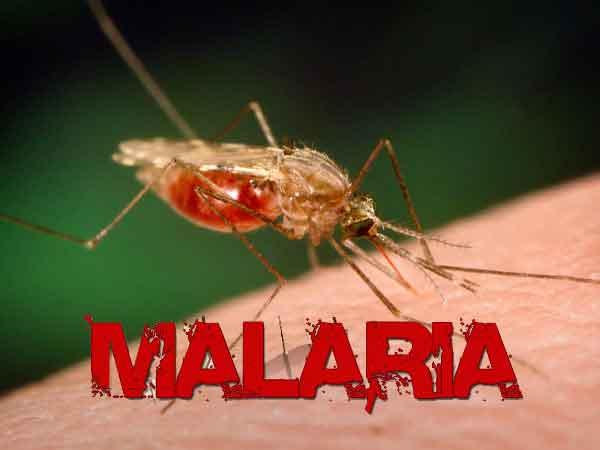 Resultado de imagen para malaria