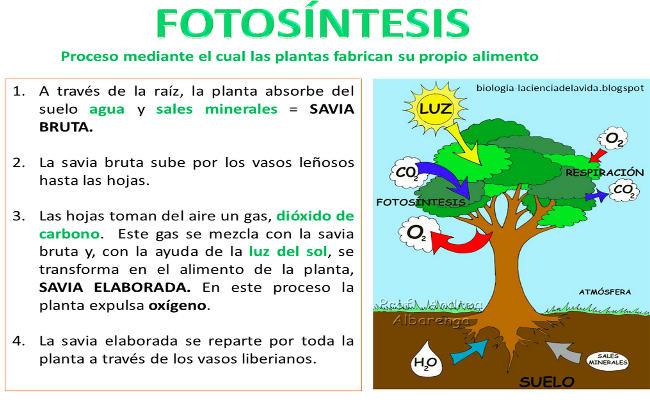Fotosintesis – Escuela Bloguera