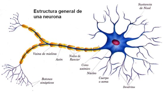 Informacin de las Neuronas Mapas conceptuales e imgenes