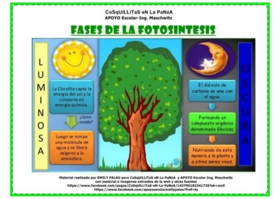 fotosintesis-3-638