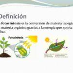 Información sobre la fotosíntesis y sus fases: Cuadros sinópticos e imágenes