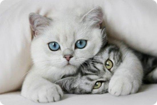 informacion-sobre-el-gato-2.jpg