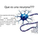 Información de las Neuronas: Mapas conceptuales e imágenes