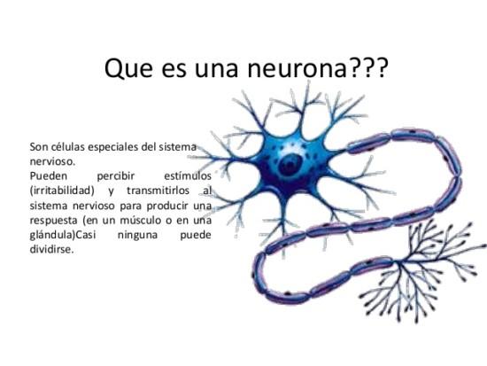 neuronas-3-638-1