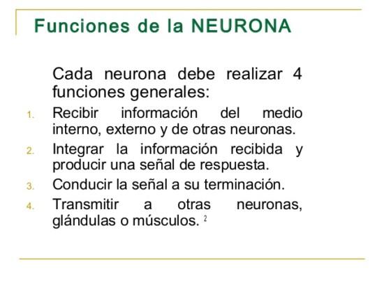 sistema-nervioso-3-638