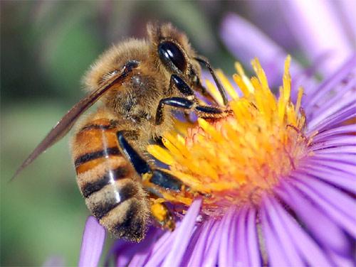 abejas_produccion_miel