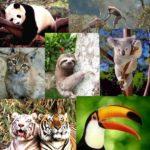 Más información de los animales en peligro de extinción en el planeta