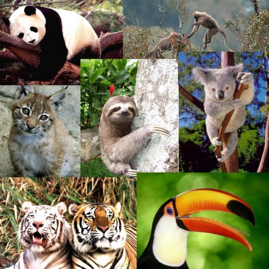 especies-en-peligro