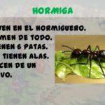 Información para niños sobre las hormigas