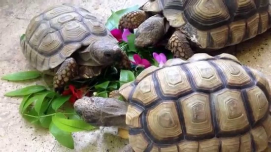 tortugasmaxresdefault