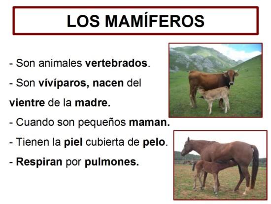 Mamífero1