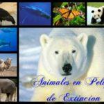 Información sobre Animales en Peligro de Extinción