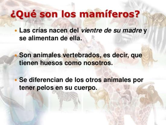 los-mamferos-3-728