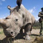 Especies de animales en peligro de extinción
