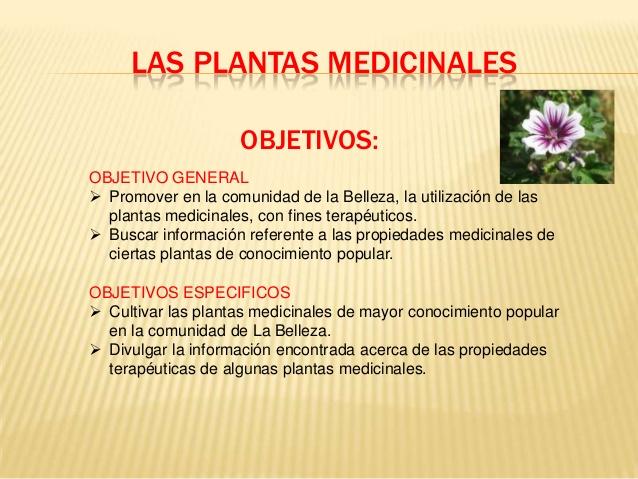 Informaci n sobre plantas medicinales tipos y propiedades - Todo sobre las plantas ...