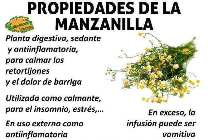 manzanilla-propiedades-medicinales