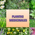 Información sobre plantas medicinales: Tipos y propiedades