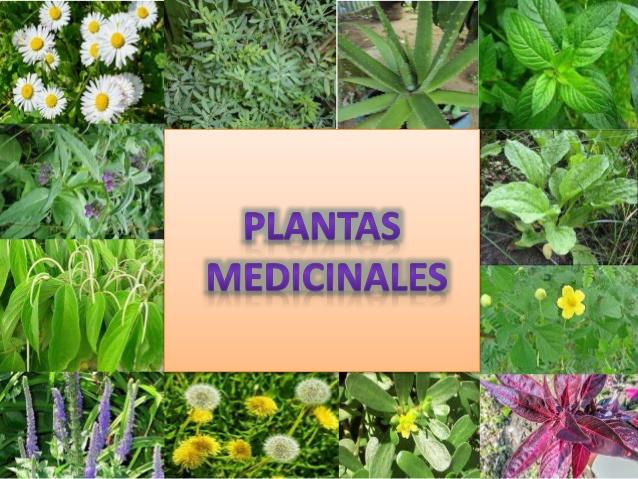 Información sobre plantas medicinales Tipos y propiedades