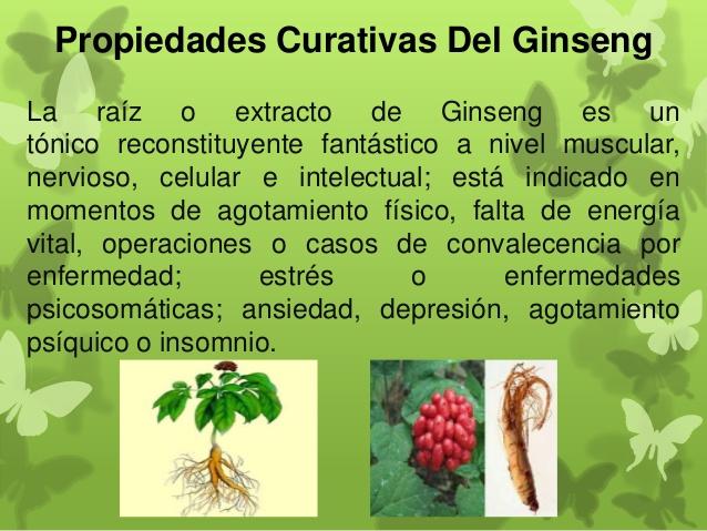 Informaci n sobre plantas medicinales tipos y propiedades for Que es un vivero de plantas