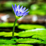 Información sobre las plantas carnívoras, acuáticas, perennes y terrestres