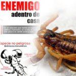 Información sobre Alacranes: Picadura, síntomas y prevención