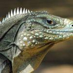 Información de los Reptiles: características generales y divisiones