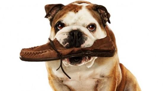 Tratamiento-para-conductas-compulsivas-en-perros1