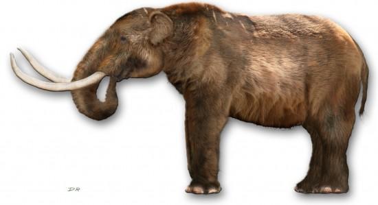 mastodonte+