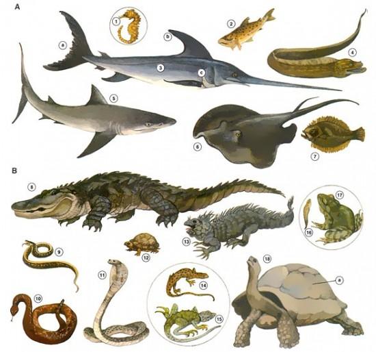 animales-oviparos-y-viviparos-23499