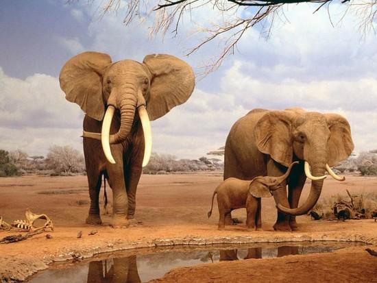 Dibujos de animales 5/8 - Cómo dibujar un elefante