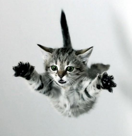 sindrome-del-gato-paracaidista